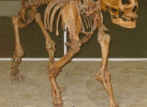 schelet piramida